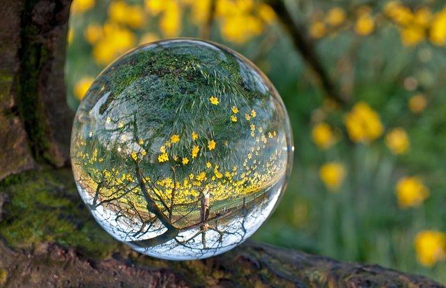 Spiegelung von Narzissen in einer Glaskugel (piqs.de ID: 4bc3484b25634112708a180bdb3f6c3a)